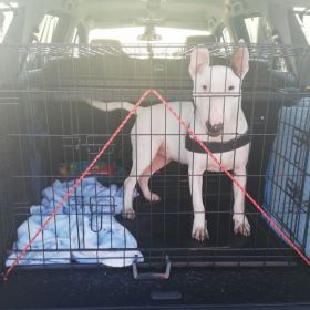 Transport zwierząt domowych Psy Kotki 24h Rzeszów